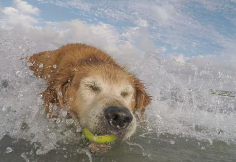 Playing with Farley, Dog Beach, Del Mar
